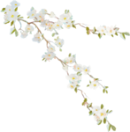 ldavi-heartwindow-blossombranch1.png