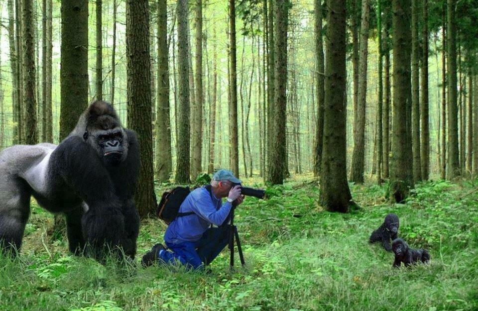 В лесу смешные картинки, открытки
