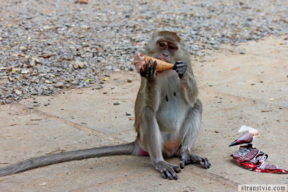 обезьяна есть мороженое в краби
