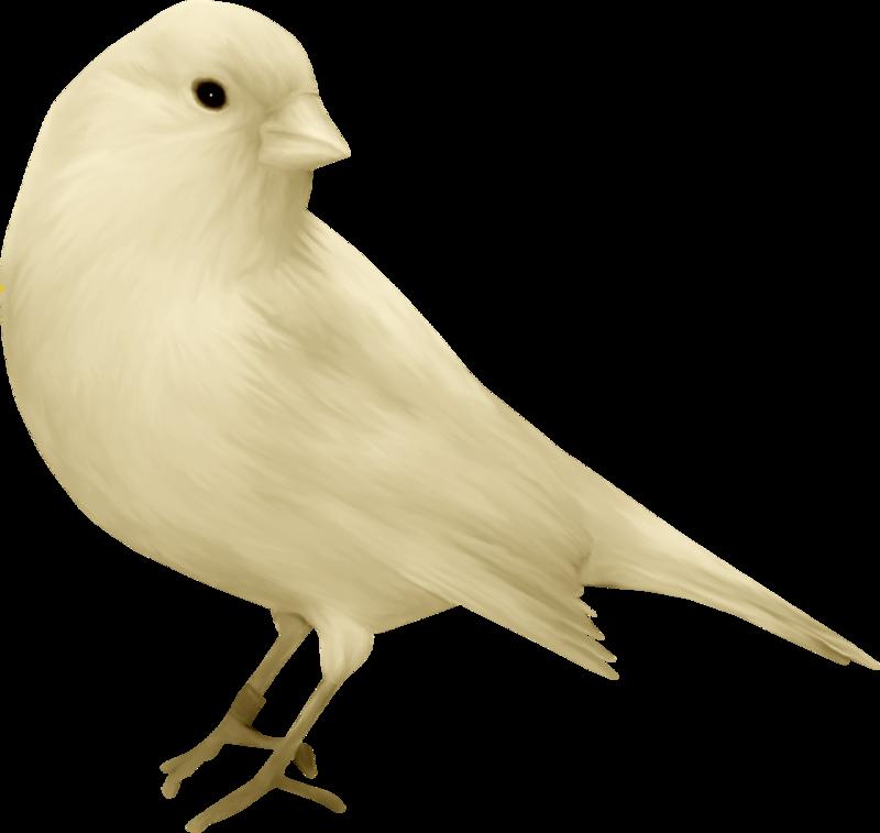 Vole vole petit oiseau 8