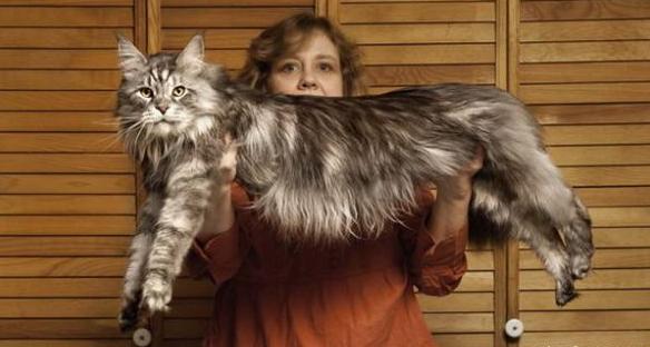 Павел воля порода кота