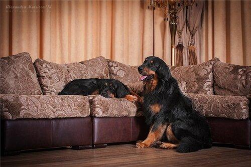 Брюс и Теша