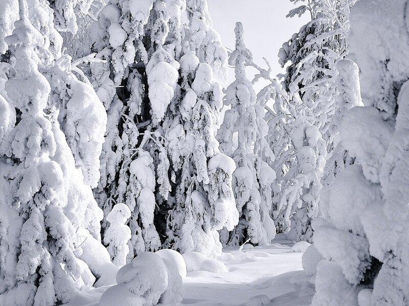А вокруг белым бело и снегу намело