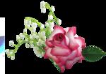 الشيخ محمد نصر الطاروطى ماتيسر من سورتى  لقمان والحشر من مكتبة ابو احمد 0_85daa_8045c123_S