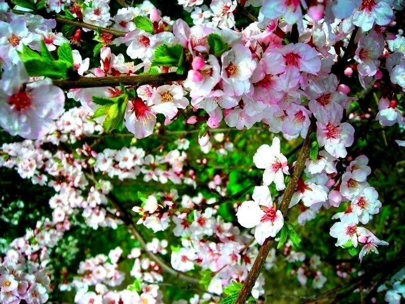 Весна своими крыльями взмахнула...