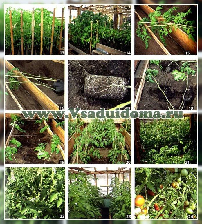 выращиваем рассаду - фото 2