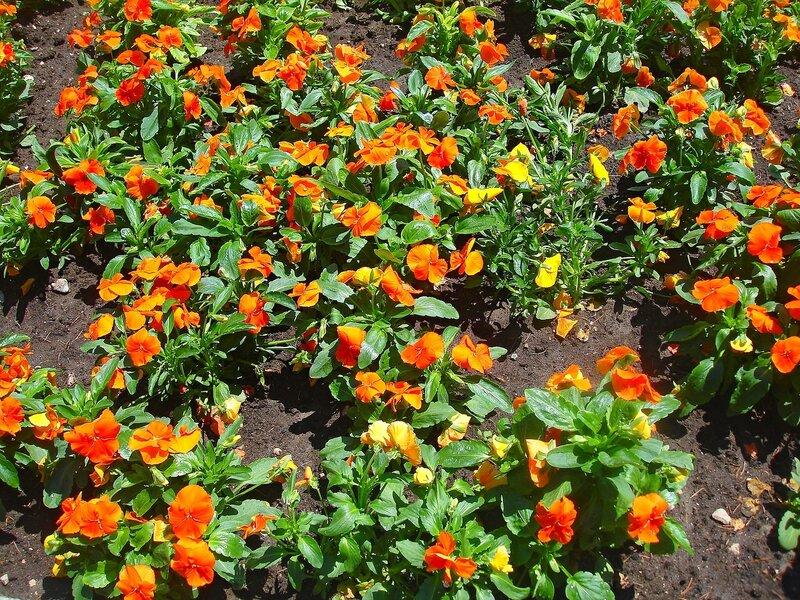 Скоро весна - появятся прелестные цветы