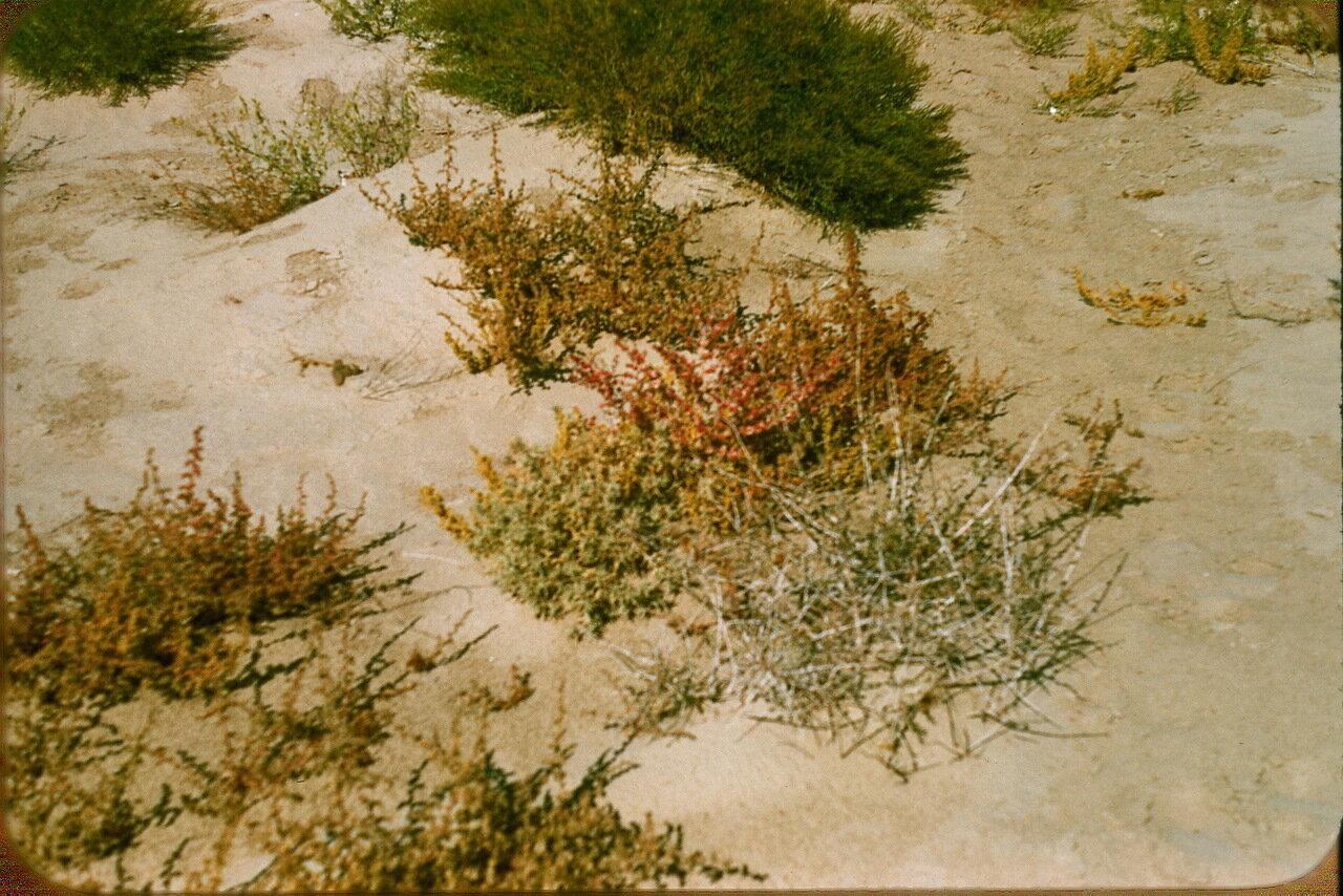 14.Растительность в пустыне