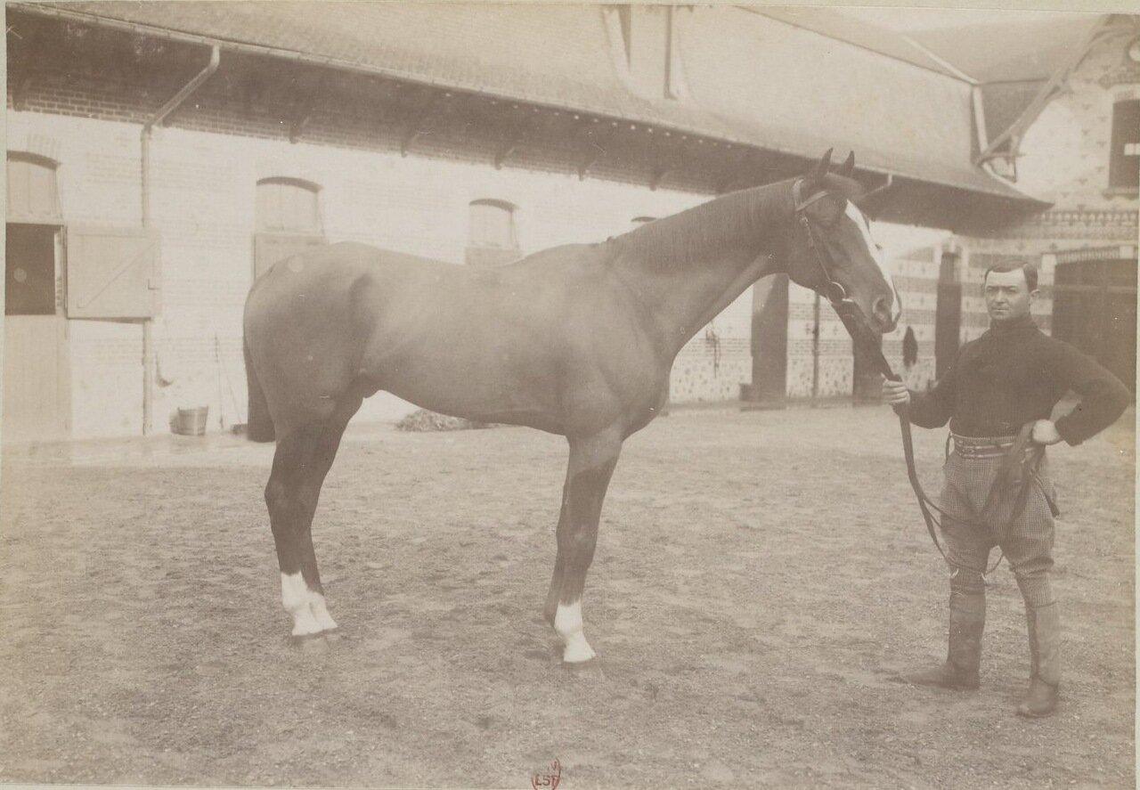 Лошади в школе верховой езды