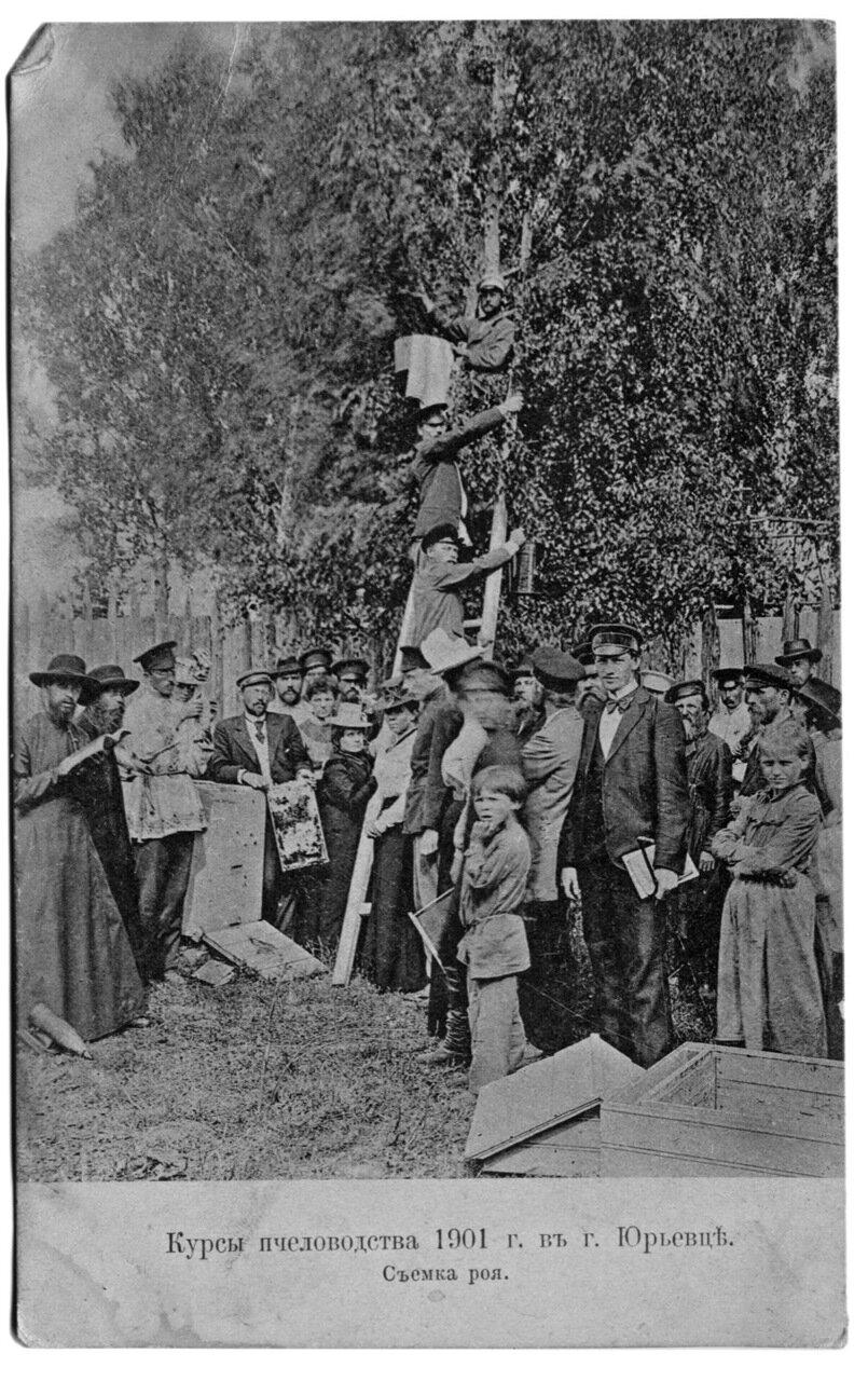 Курсы пчеловодства 1901 г. в г. Юрьевце. Съемка роя