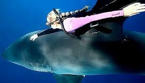 Девушка-водолаз прокатилась на спине акулы-людоеда