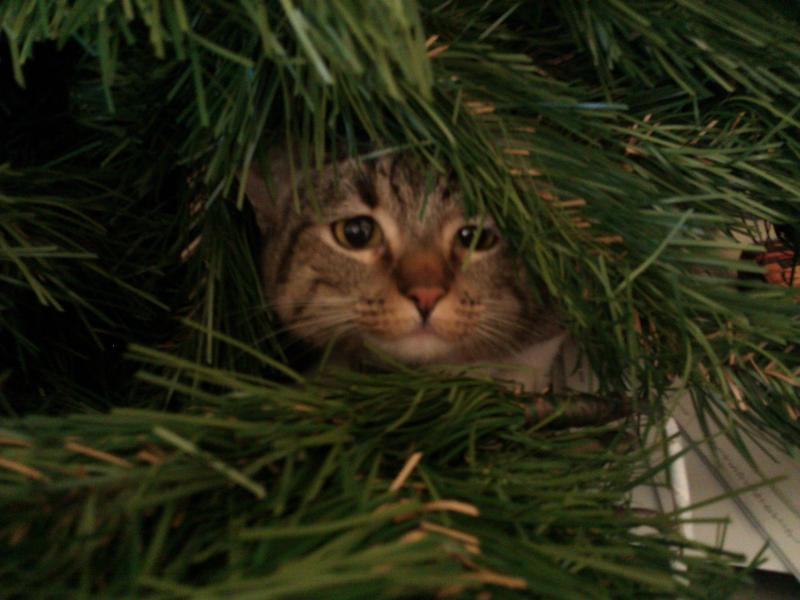 Коты на ёлке - фото 5