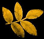 feli_l_foliage4.png