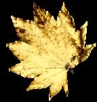 Gold Leaf_2.png