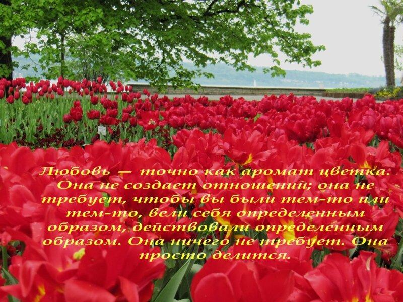 http://img-fotki.yandex.ru/get/6440/25708572.80/0_91eb6_d34b26e9_XL.jpg