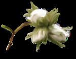 martad_WhiteForest_el(11).png