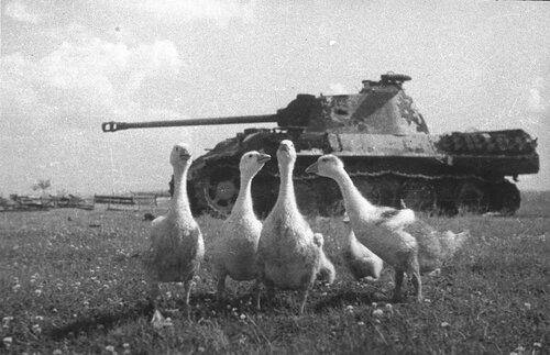 Подбитая немецкая военная техника. Часть 1. 18+