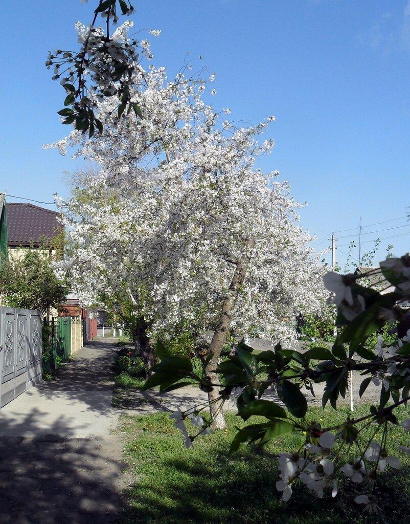 Цветение, апрель