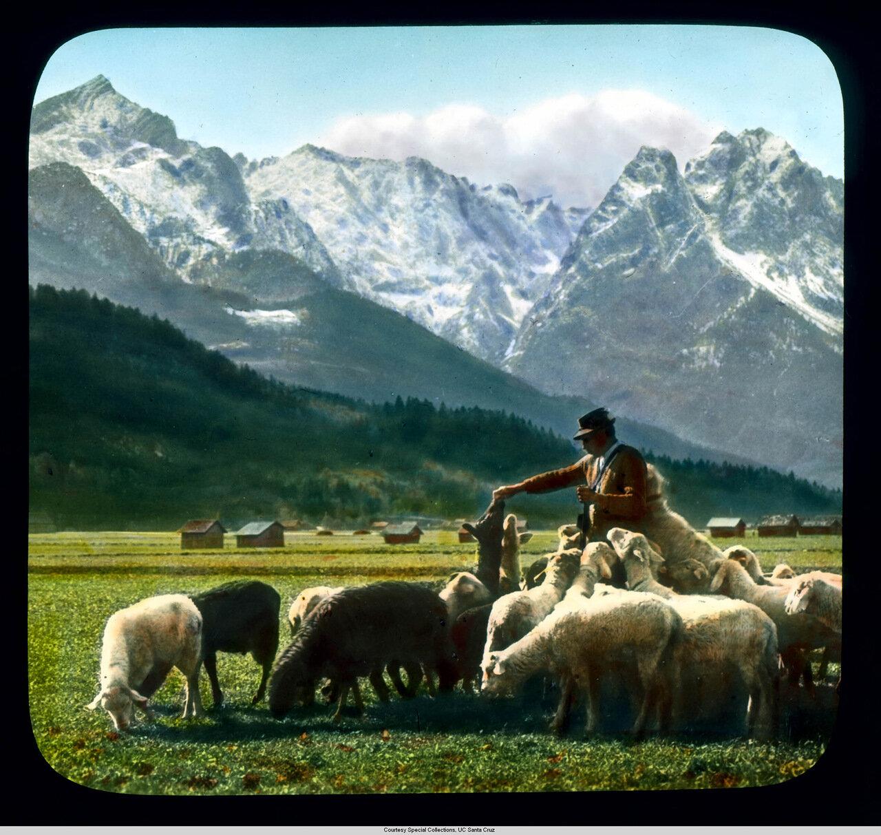 Бавария. Пастух со своим стадом в Веттерштайнских Альпах