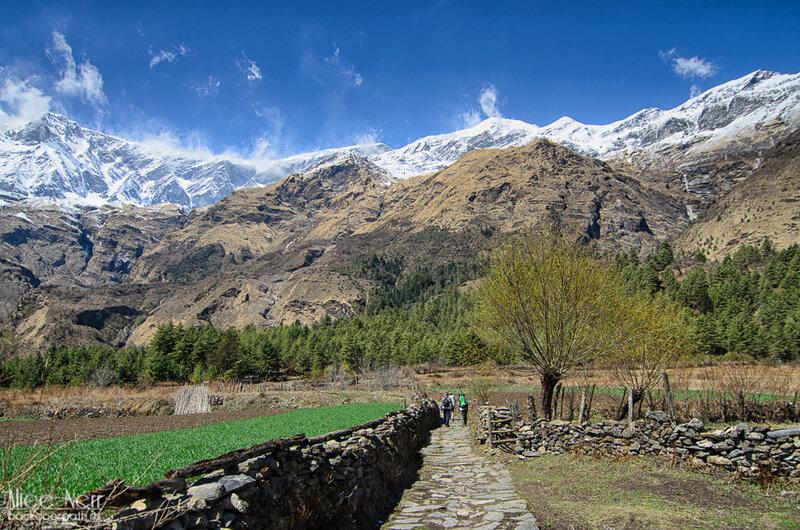 идем через безымянную деревню к водопаду в кобанге, гималаи, непал, горы, снежники, рисовые поля