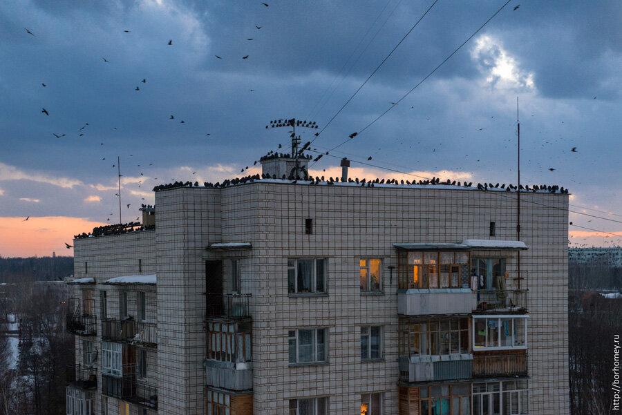 собрание птиц