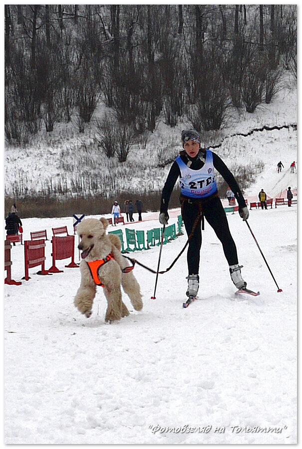 Ездовой спорт 2013