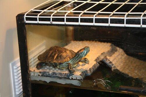 Островок для водяной черепахи