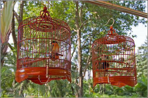 Птички в парке