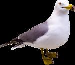 Holliewood_Junkyard_Seagull1.png