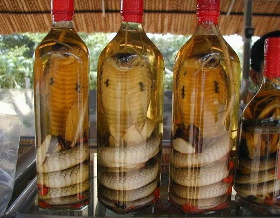 Вино из змеи - Самые странные алкогольные напитки нашего времени