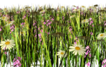 Lug_Grass_Flower (7).png