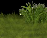 Lug_Grass_Flower (67).png