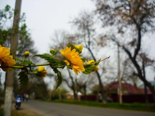 Мои фото. Природа
