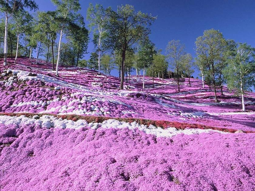 Цветущий розовым японский парк Хицудзияма. Фотографии 0 141acf 303b0bd7 orig