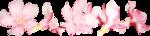 CaliDesignForourLife_Elements (18).png
