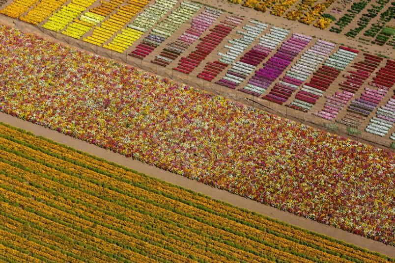 16. Цветочные поля, Ломпок, Калифорния, США, 2013 г. (Alex MacLean / Beetles+Huxley)