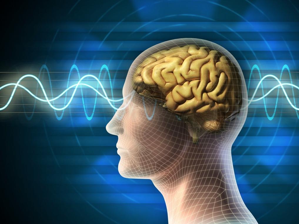 Однажды в Рыбинске Биологи научились управлять работой мозга при пом