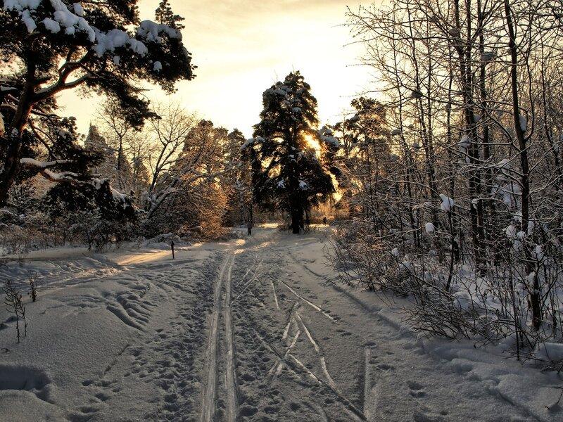 Жидкое золото солнца на лыжной трассе в Заречном
