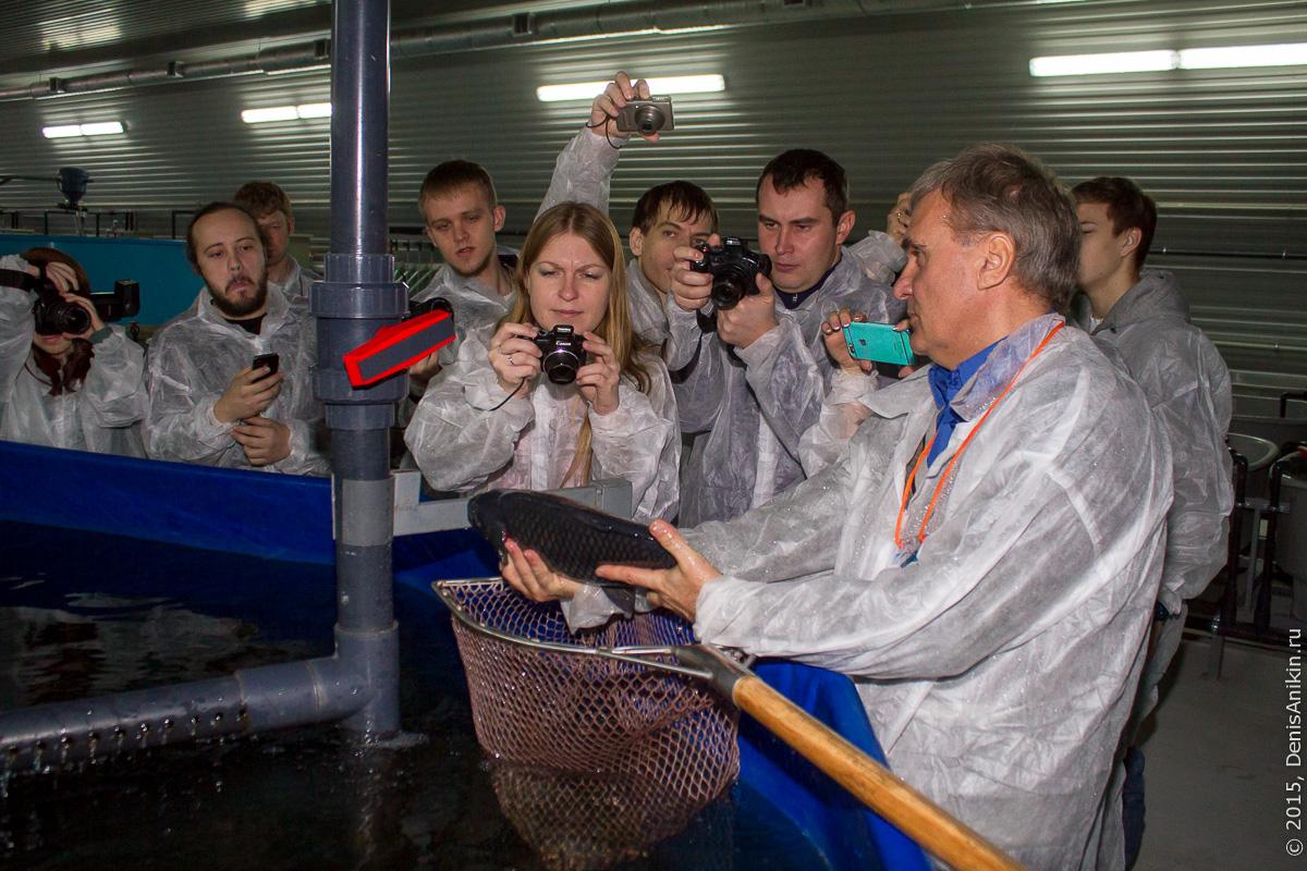 Акваресурс Саратов Энгельс рыба осетр 17