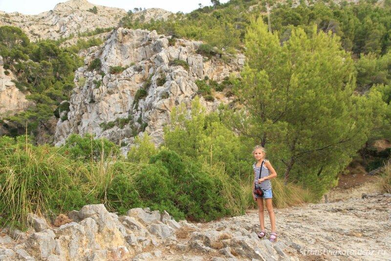 Mallorca, Pinar