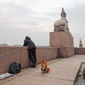 Суровый зверь (Петербург, рыболов, собака, сфинкс)