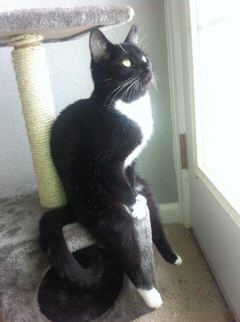 Котик, который везде сидит, как человек