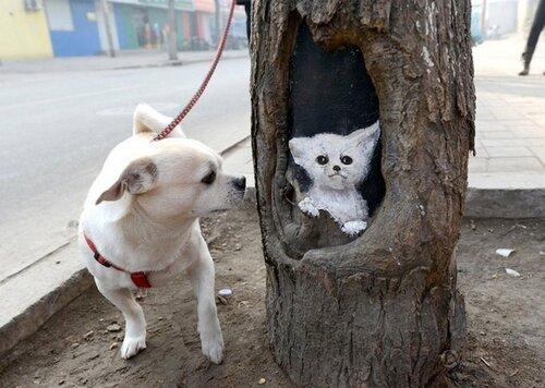 Необычные рисунки на стволах деревьев