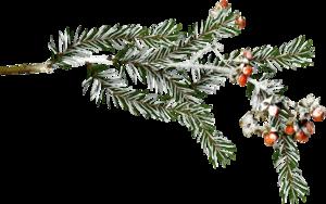 снежные ветки с ягодой