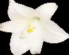 клипарт весенние цветы 22.png