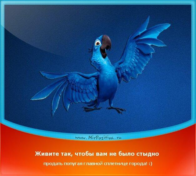позитивчик: Живите так, чтобы вам не было стыдно продать попугая главной сплетнице города! :)