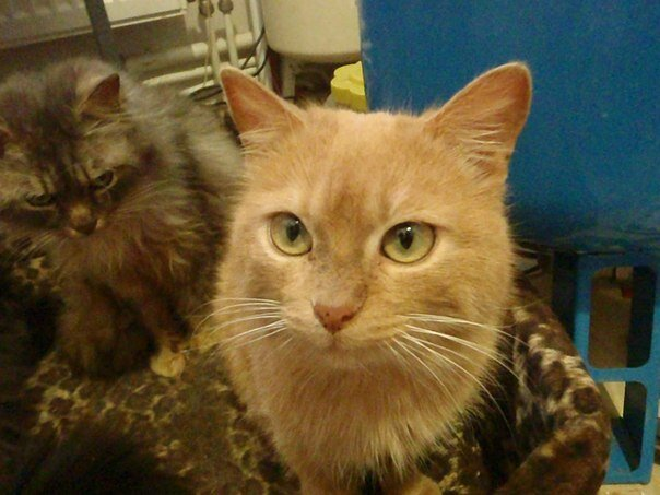 Два мешка кошек