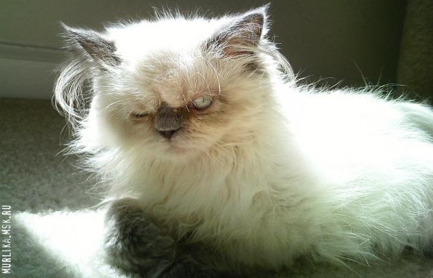 У кошки выпадает шерсть - Фото