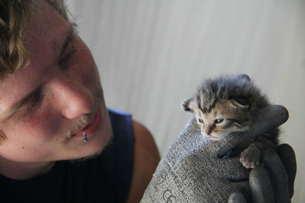 Работники по утилизации мусора спасли трех котят