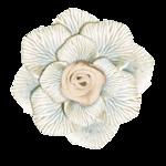 adelina_aliya_flower1.png